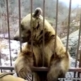 Cutre hungry Bear Wants to Eat