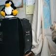 Funny Cat vs Computer CD Drive