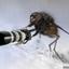 Photo fly