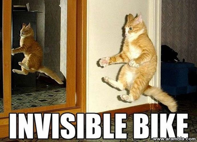 """The Best """"Invisible"""" Cat Pictures"""