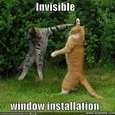 "The Best ""Invisible"" Cat Pictures"