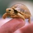 Tiny Adorable Animals