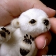 Tiny Adorable Animals