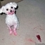 Dog Fails