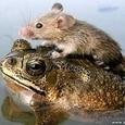 The Cutest Animal Friendship