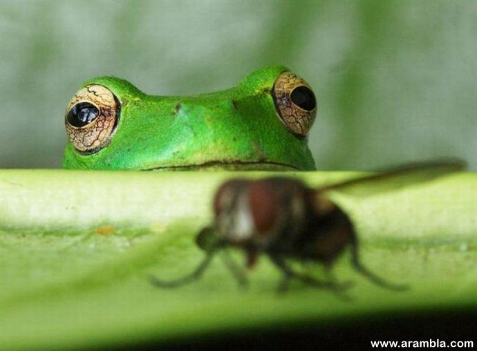 Frog & Dinner