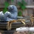 Resting squirrel