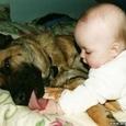 Laps ja koer