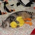 Kass magab