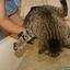 Kass ja vesi