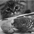 Papagoi