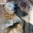 Õnnelik karu