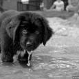 Väike koer